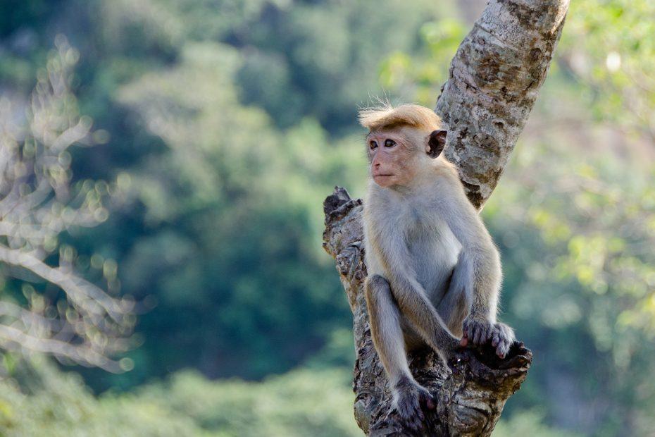 Spot wildlife tijdens je reis in Sri Lanka