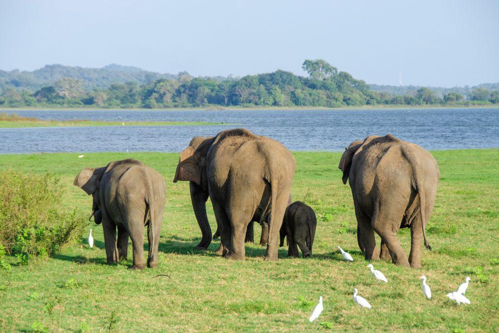 Yala Safari in Sri Lanka