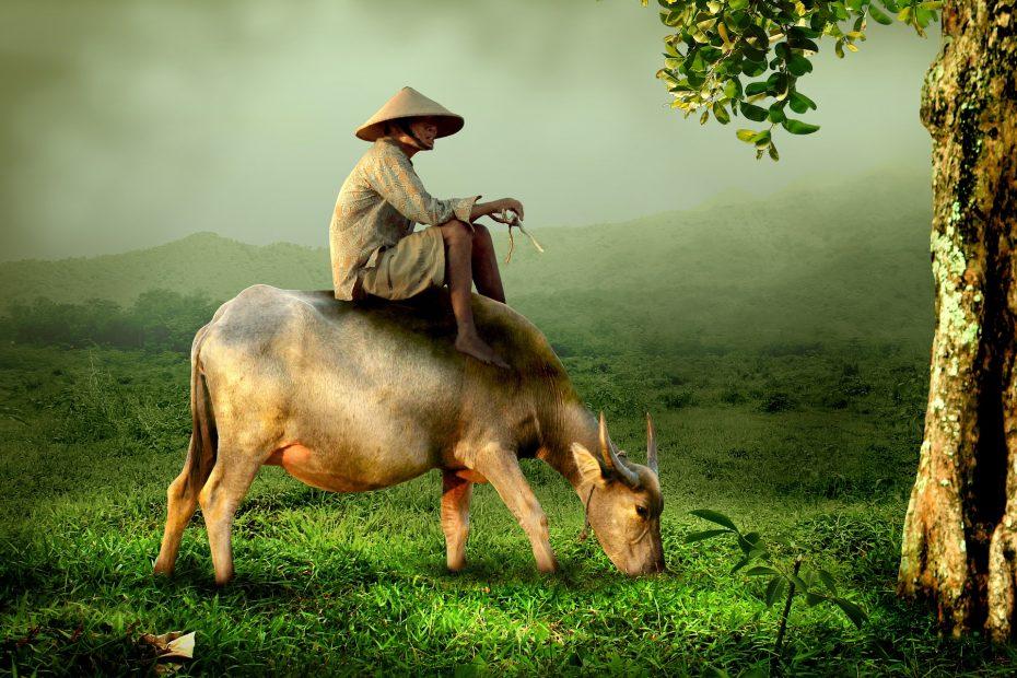 Ontdek het platteland van Vietnam tijdens je reis