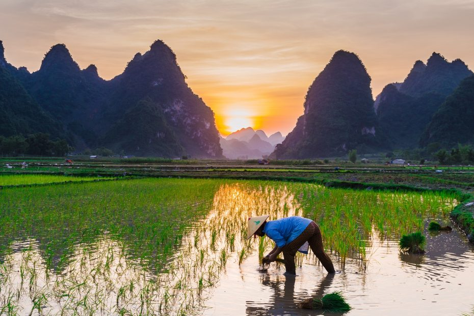 Laat je verrassen door Vietnam tijdens je lustrumreis