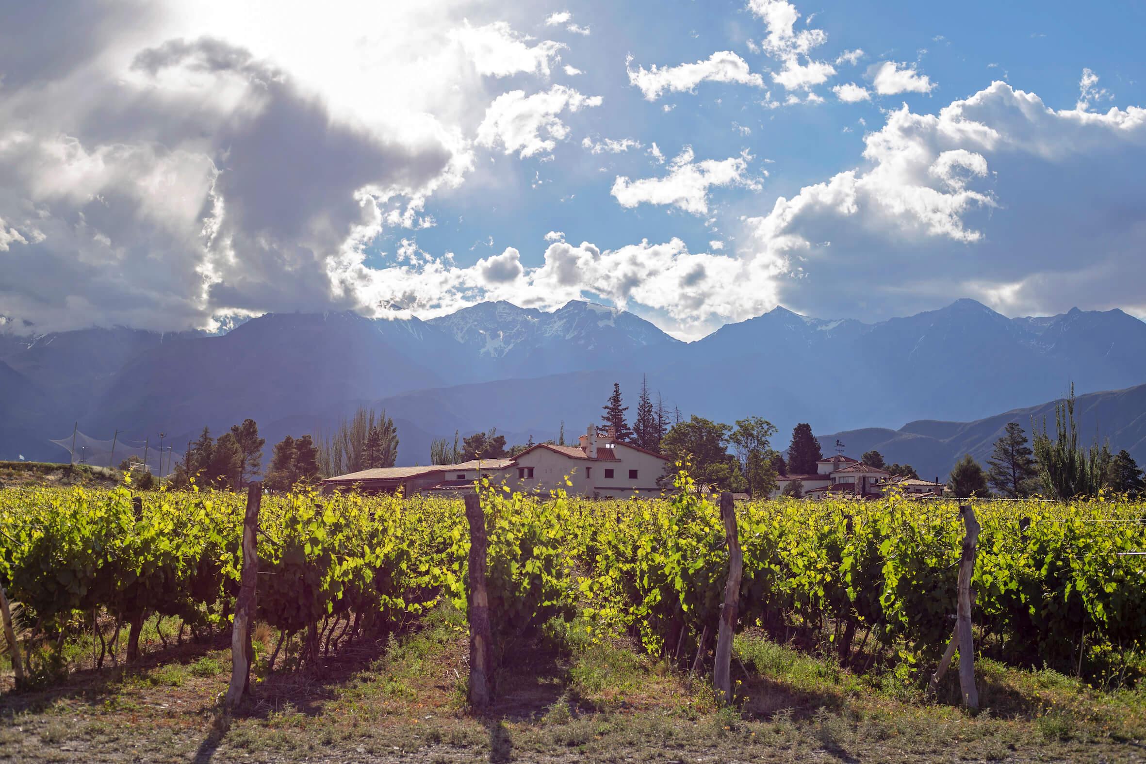 Lustrumreis Argentinie Mendoza Vino 4 (1)